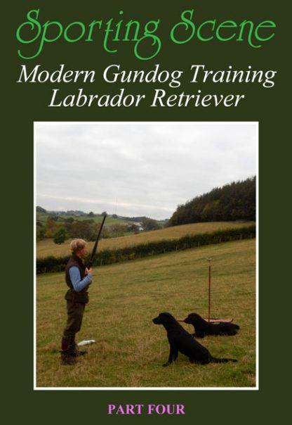 Modern Gundog Training Labrador Retriever Part Four