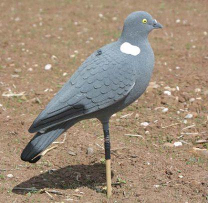 Pigeon Full Body Flocked