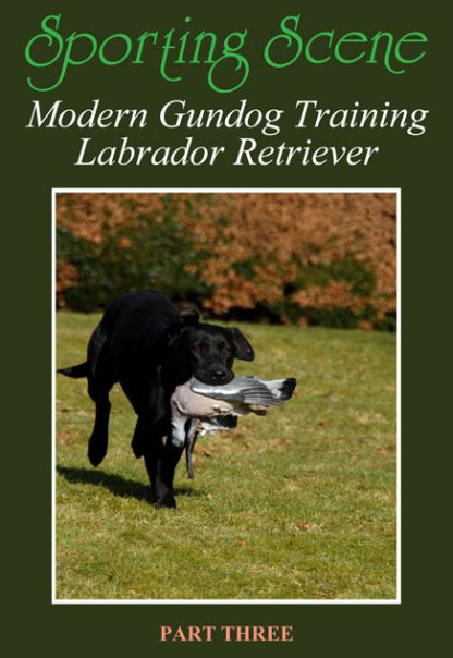 Modern Gundog Training Labrador Retriever Part Three