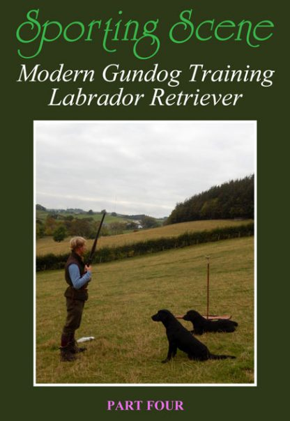Modern Gundog Training Labrador Retriever Part Four