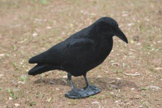 Crow Flocked Full Body